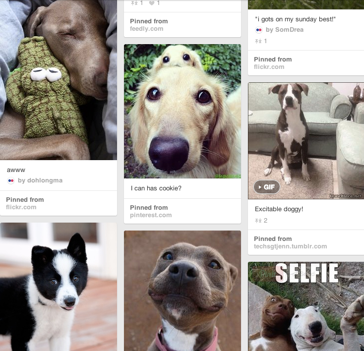 Doggies on Pinterest